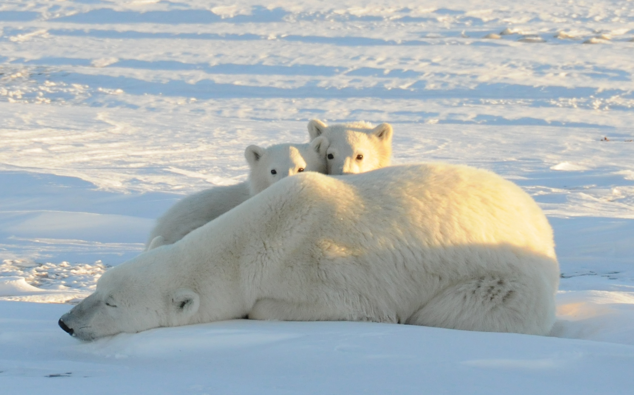 New Study Says Arctic Ice Melt And Extreme Weather
