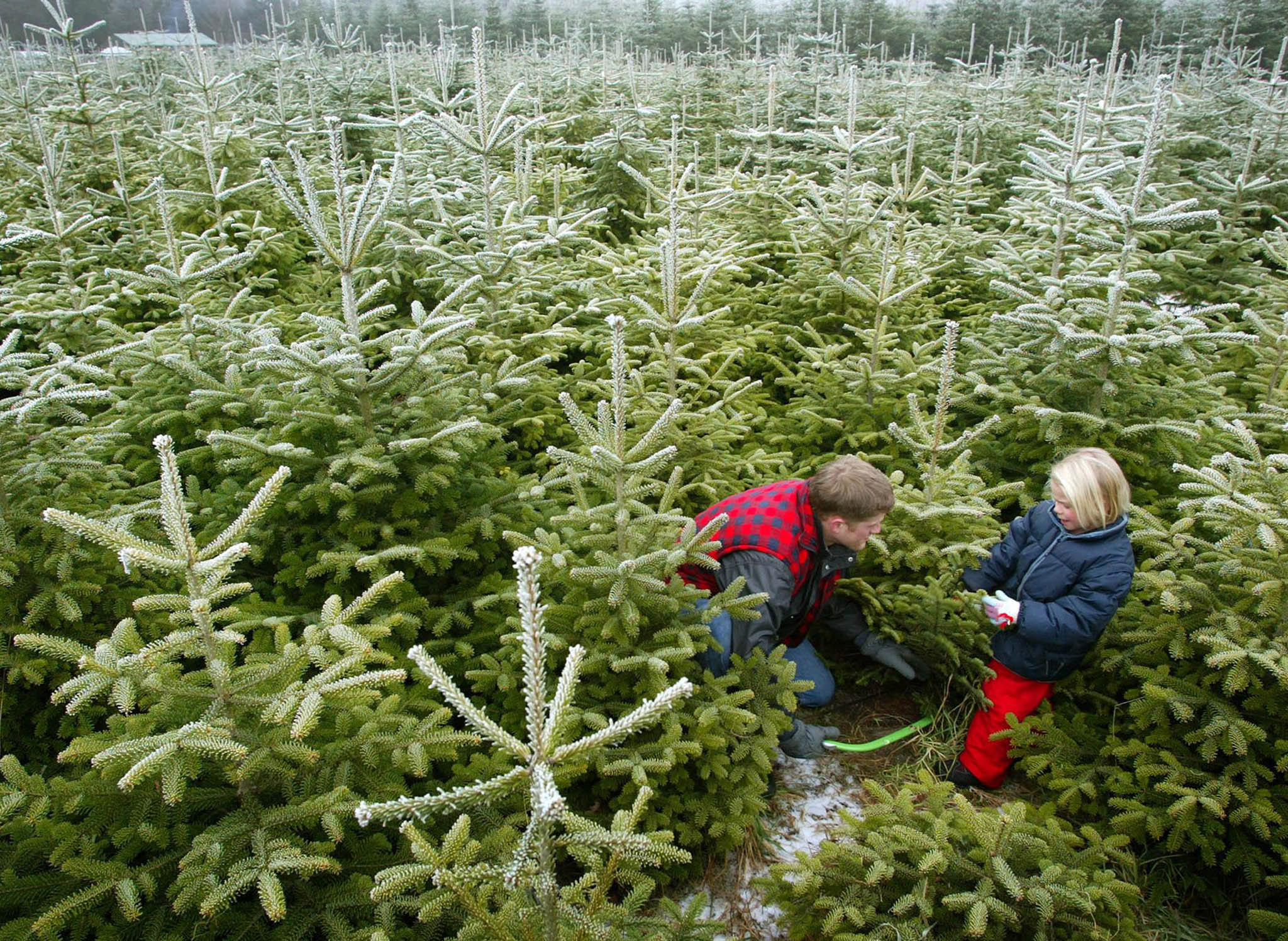 Christmas Tree Delivery: Where To Order A Real Tree Online