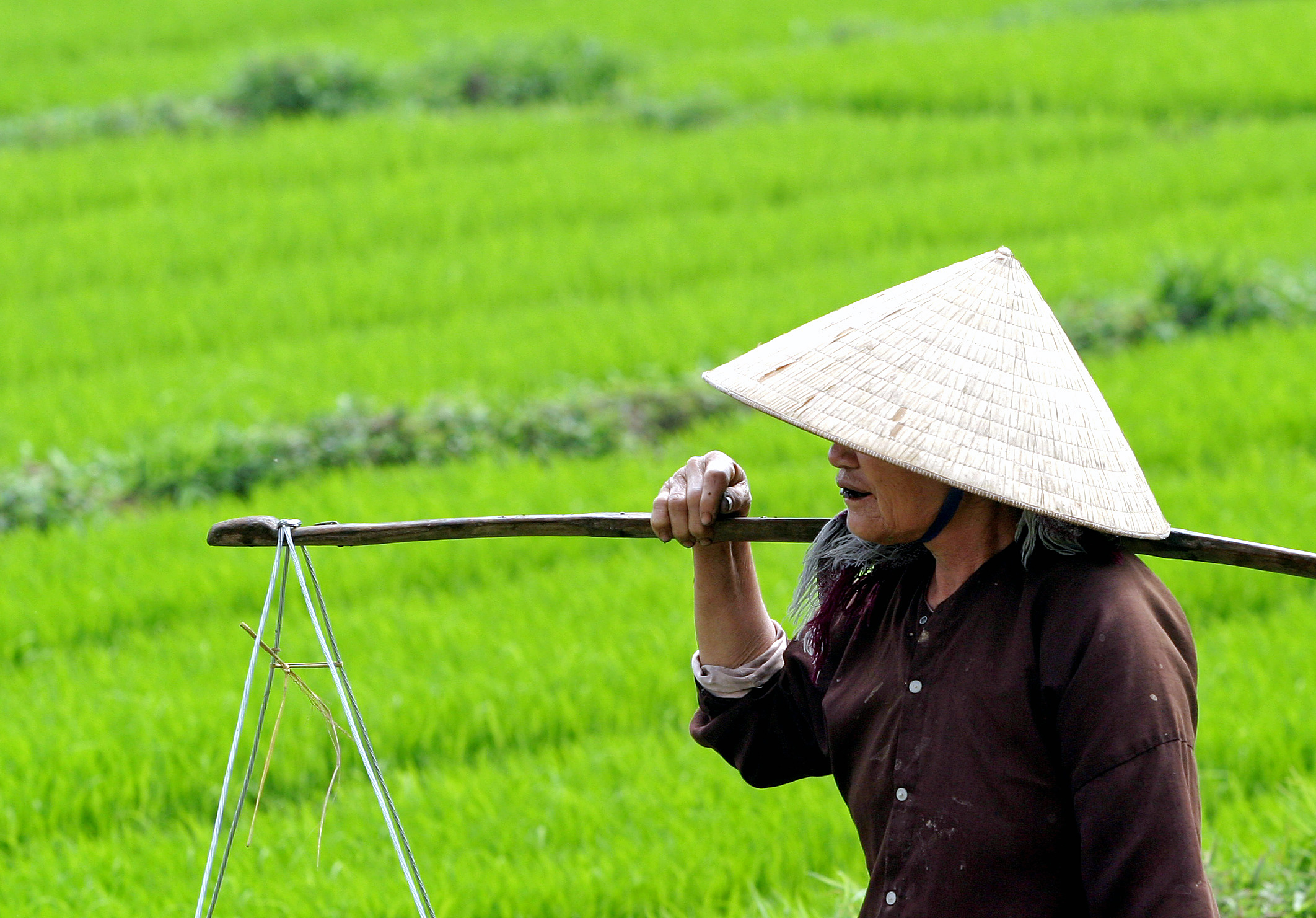 the economic growth and future of vietnam Vietnam has benefited from a period of strong economic growth  it is expected  that vietnam's future growth will depend in part on government policies driving.