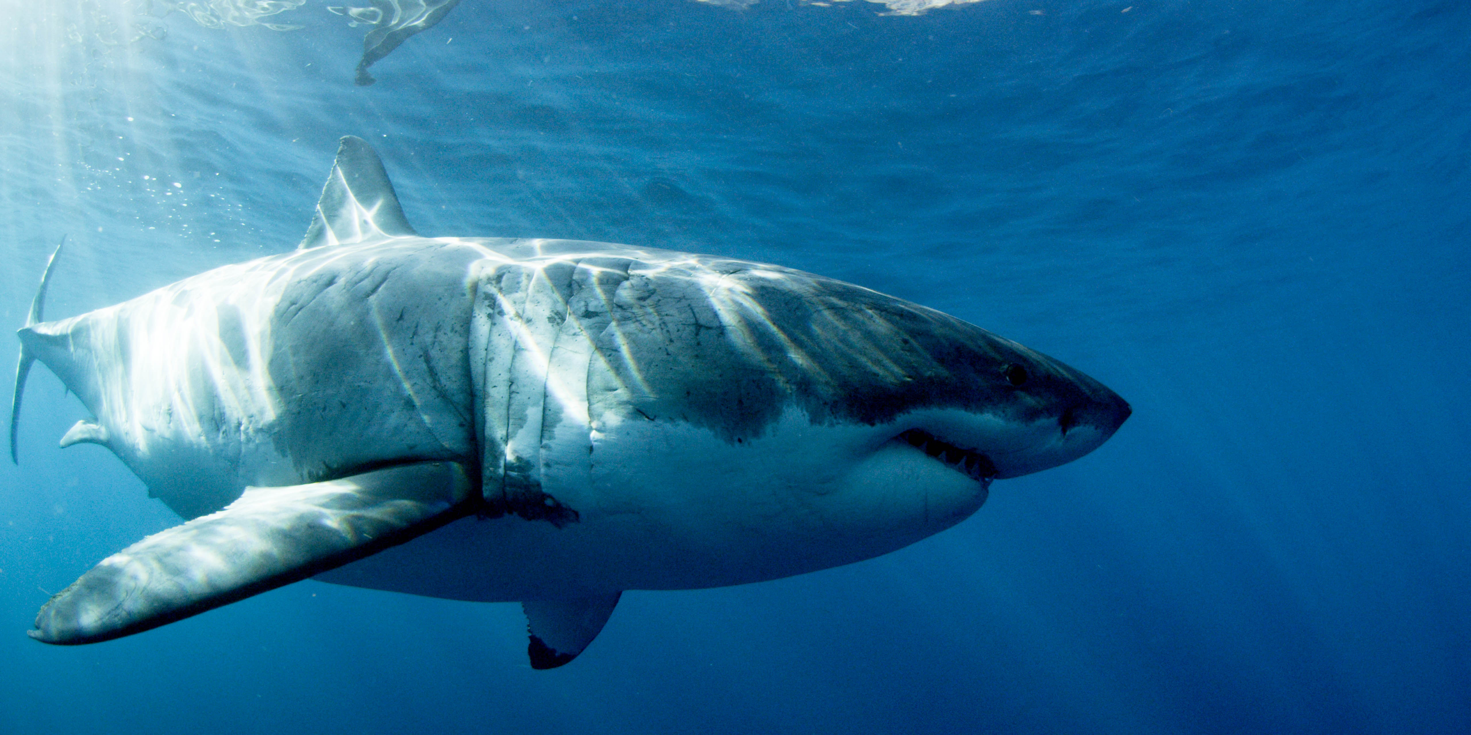 Shark Week 2015 Commercial Released; Watch First Promo Video For July 5 Premiere