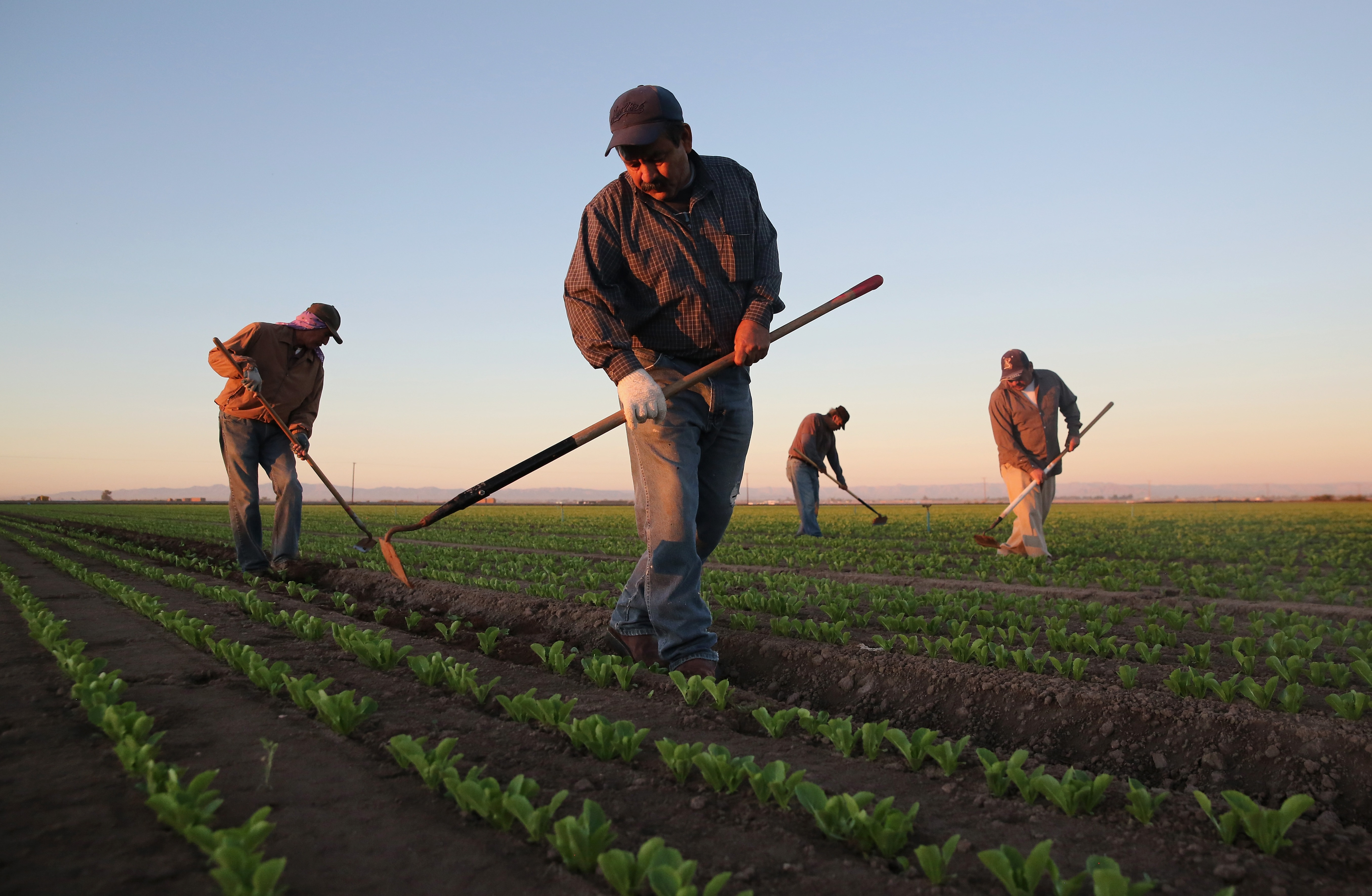 the changes in the complexion of farming over times Yet even modest changes in fertility over the coming decades could see  relative to intensive farming  take on a different complexion,.