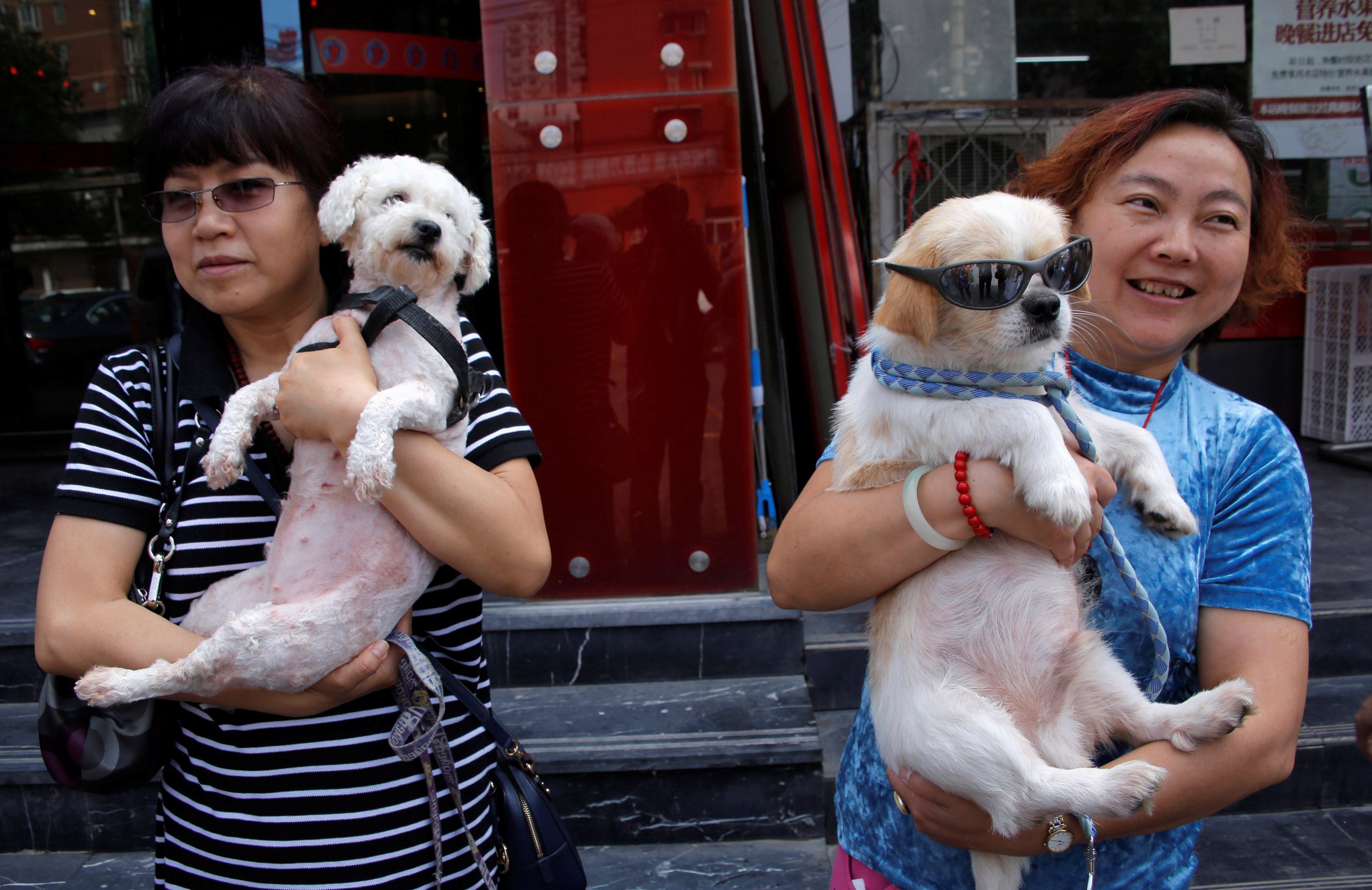 Yulin Dog Meat Festival  Vendors Cover Signs Amid Opposition From