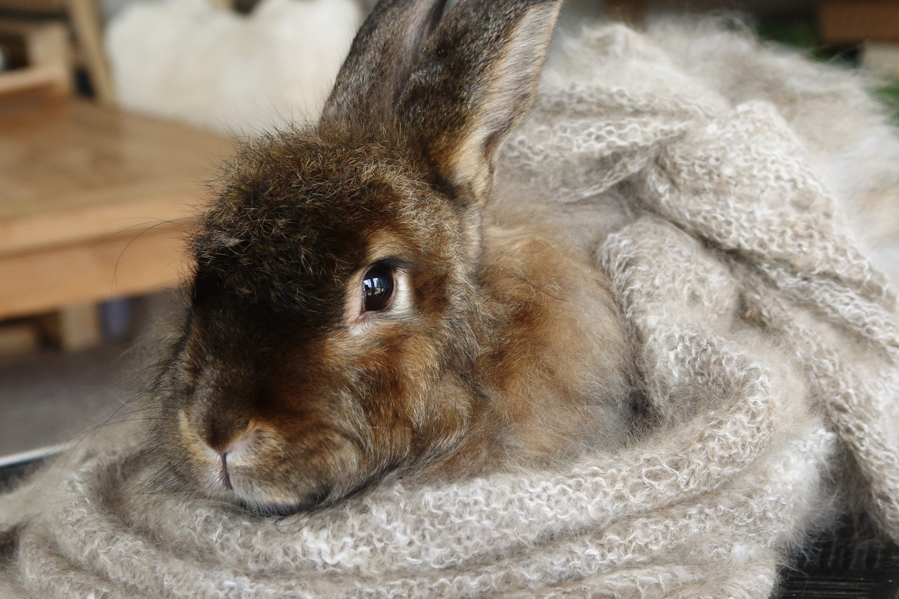 Technology Management Image: Why Did Rabbit Die On United Airlines Plane? PETA Responds
