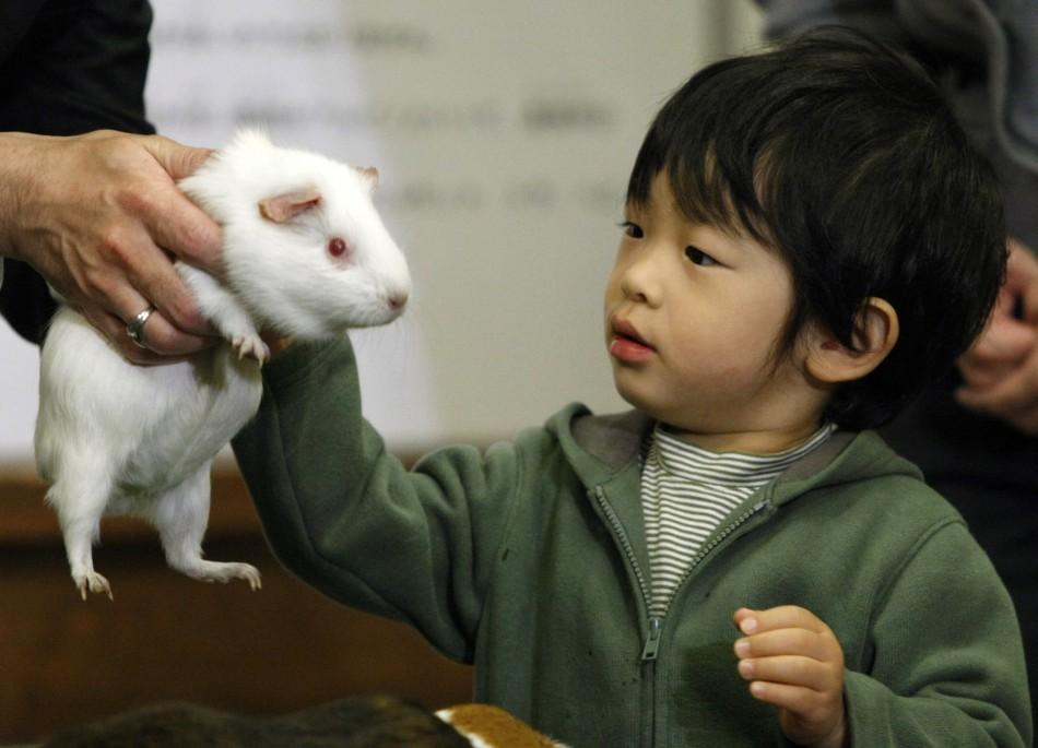 Japan's Prince Hisahito touches a guinea pig as he visits the Ueno Zoological Gardens in Tokyo