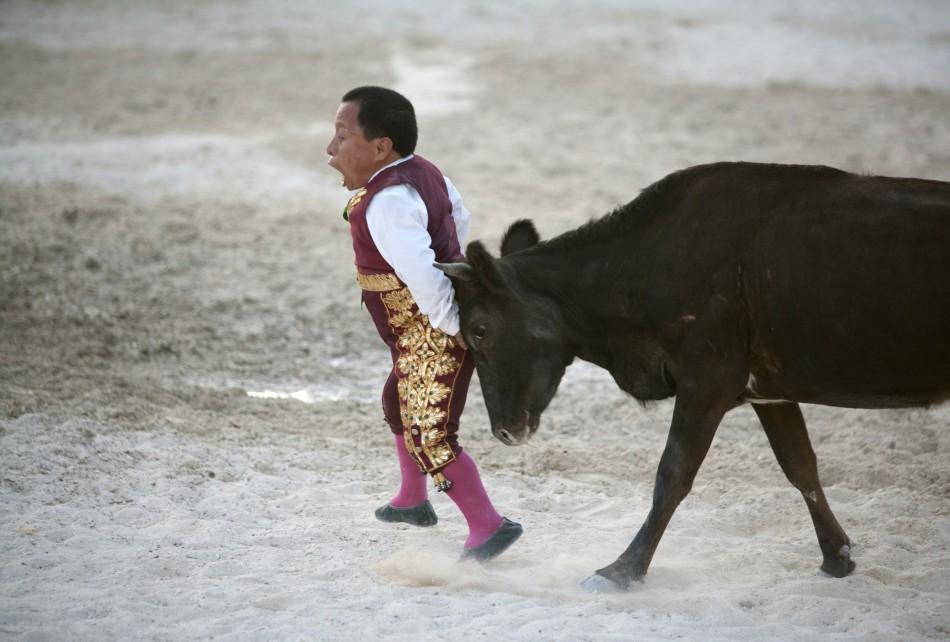 Dwarf bullfighter Osvaldo Hernandez from Los Enanitos Toreros is tackled by a calf in Cancun