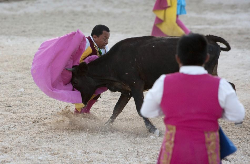 Dwarf bullfighter Osvaldo Hernandez from Los Enanitos Toreros performs a pass to a calf in Cancun