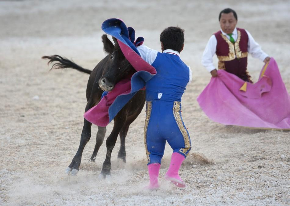 Dwarf bullfighter Jorge Vega (front) from Los Enanitos Toreros performs a pass to a calf in Cancun