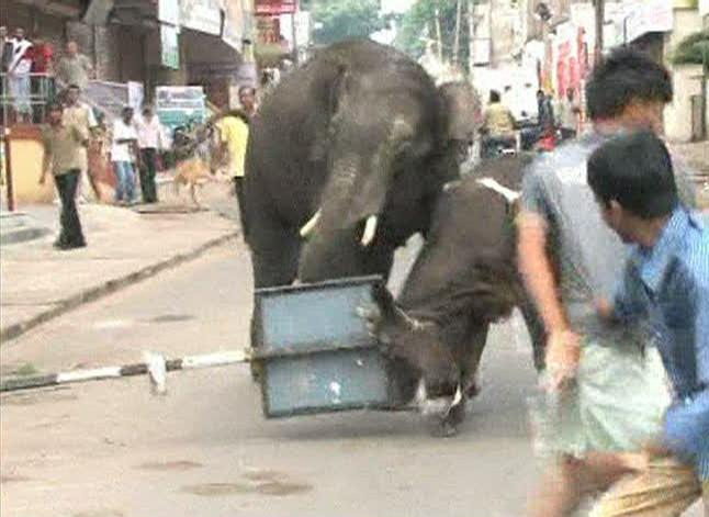 Images of a wild elephant in the Indian city