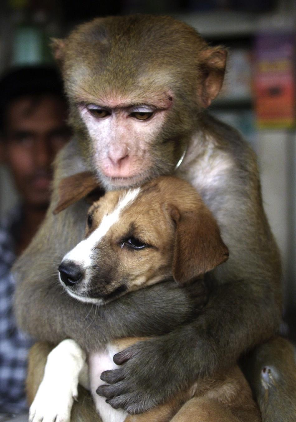 Monkey and Puppy