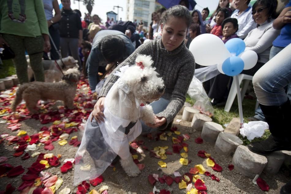 10 big fat pet weddings