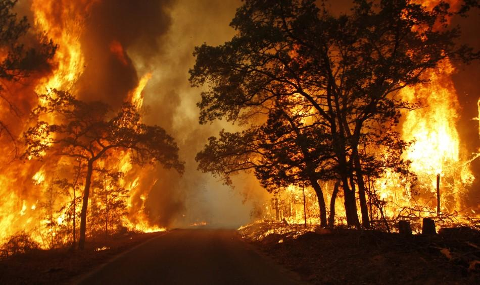 Flames engulf a road near Bastrop State Park as a wildfire goes out of control near Bastrop, Texas, September 5, 2011.