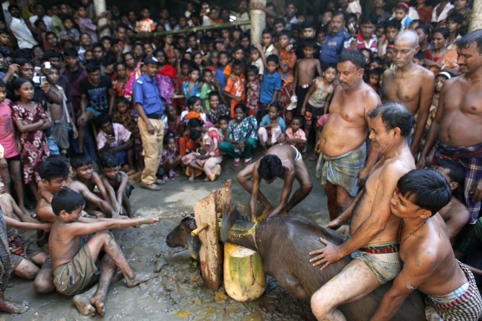 Hindu devotees sever a buffalo calf's head as part of a sacrifice, during the 'Durga Puja' religious festival in Netrokona