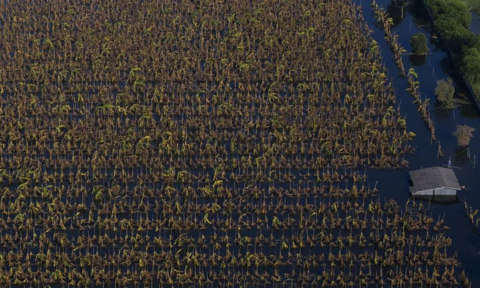 An aerial view of crops destroyed by the floodwaters are seen in the outskirts of northern Bangkok November 1, 2011