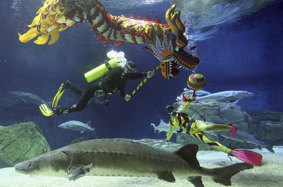 Divers perform a dragon dance during an event to celebrate the Chinese Lunar New Year at an aquarium in Beijing