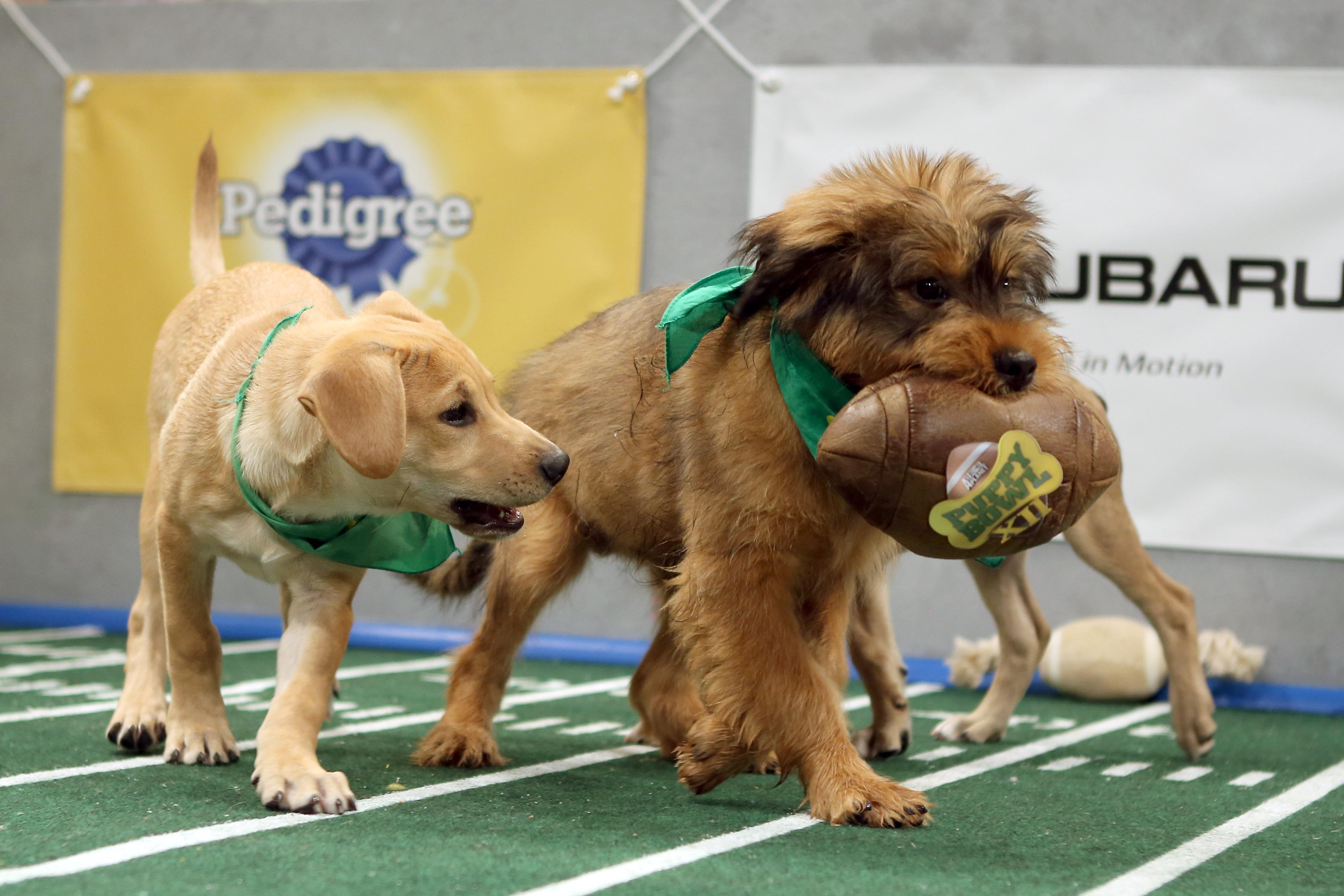 puppy bowl 2016 line up