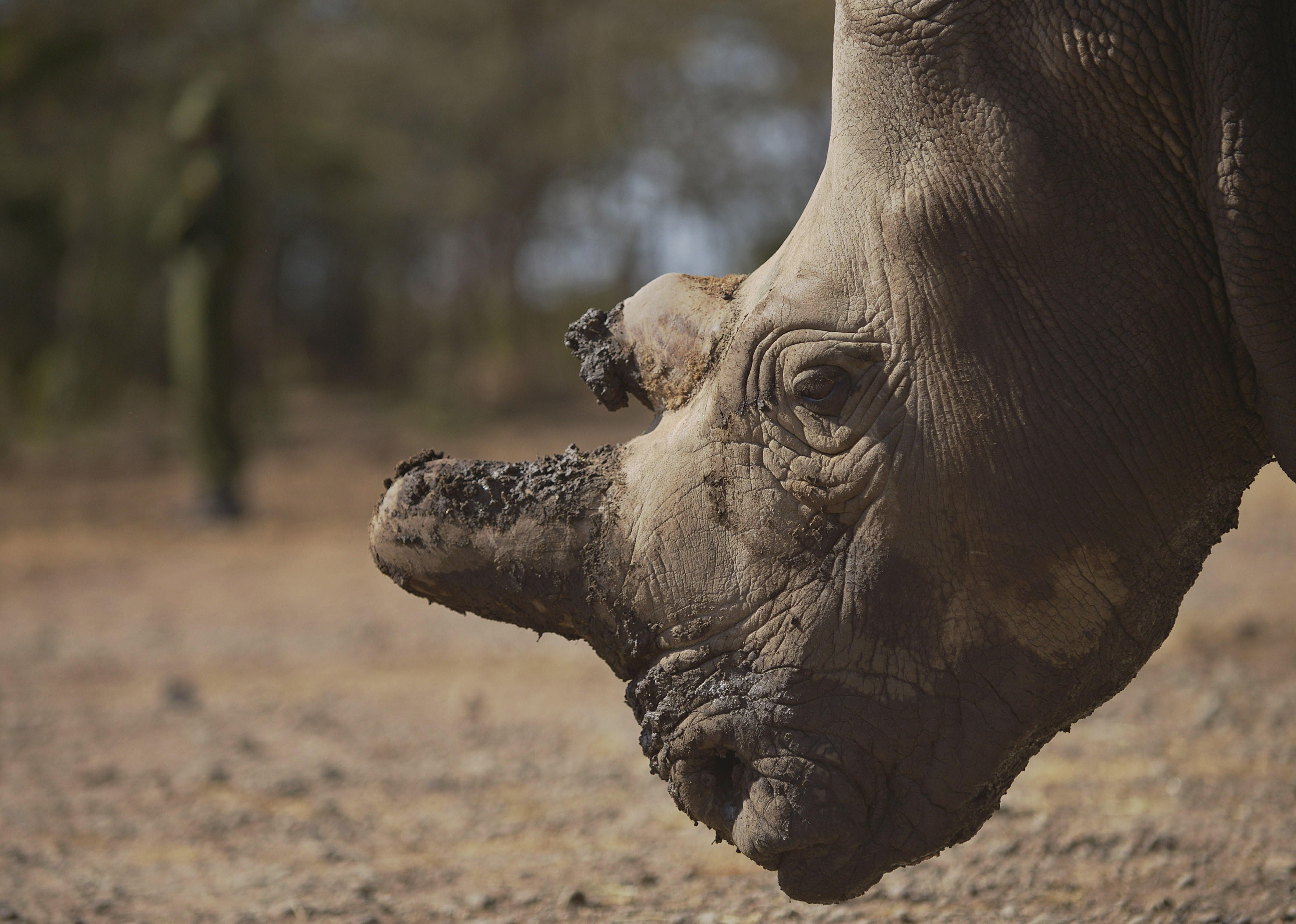 save rhino quotes