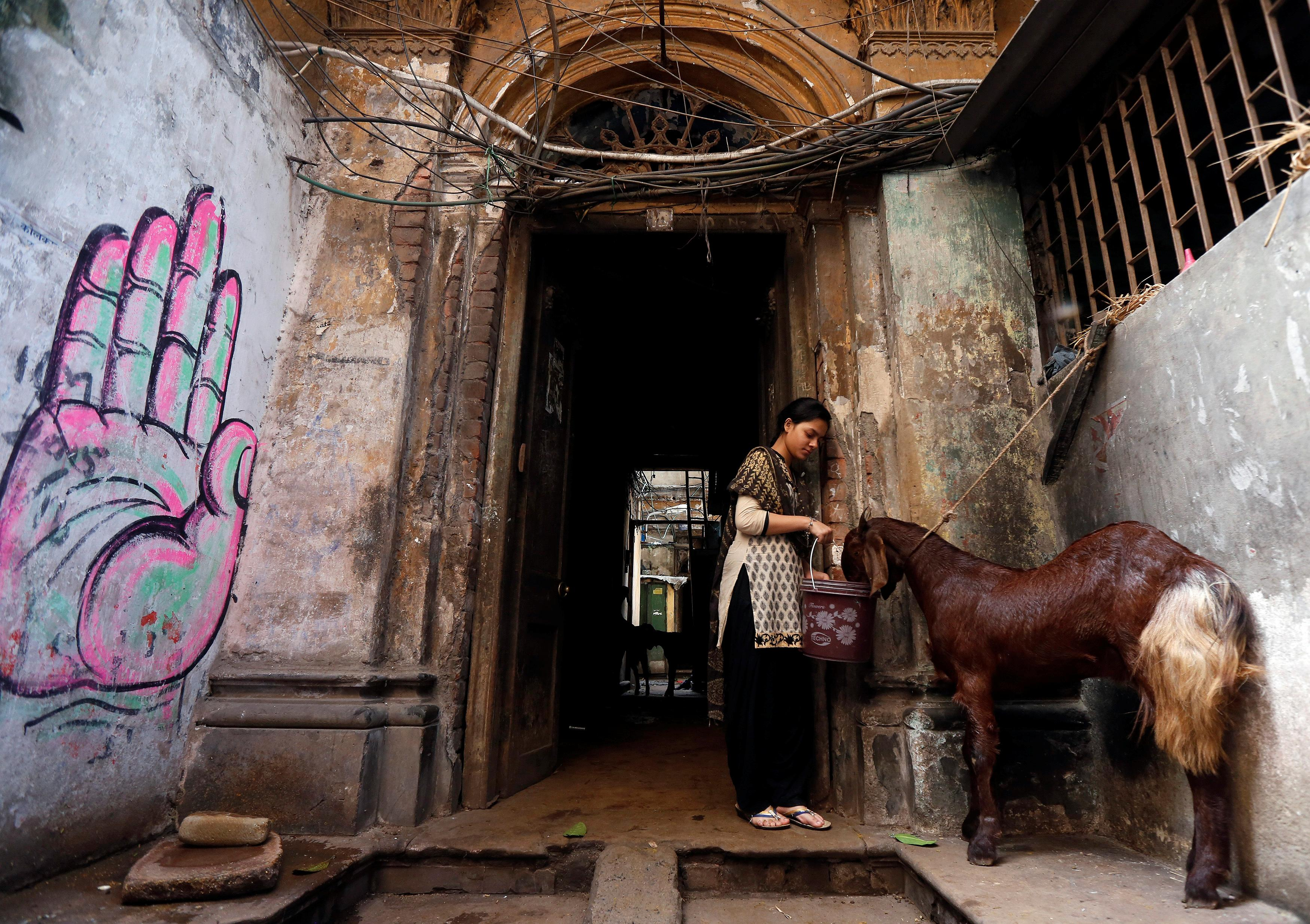 A woman gives water to a goat at her house after purchasing it at a livestock market on the eve of the Eid al-Adha festival in Kolkata, India Sept. 12, 2016. Photo: REUTERS/Rupak De Chowdhuri