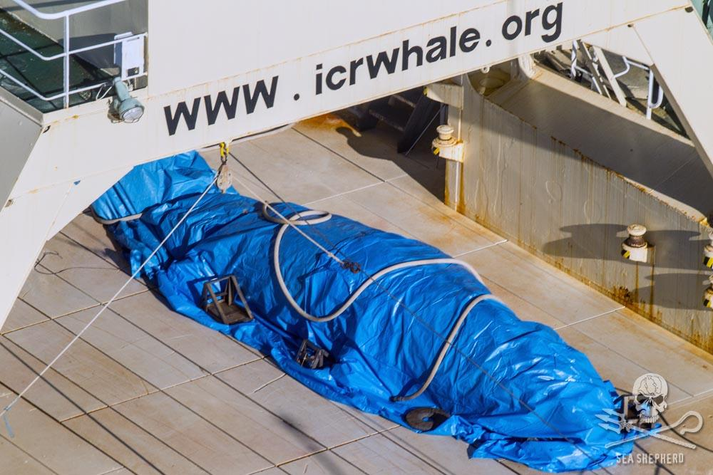 Australia 'disappointed' by Japanese whaling