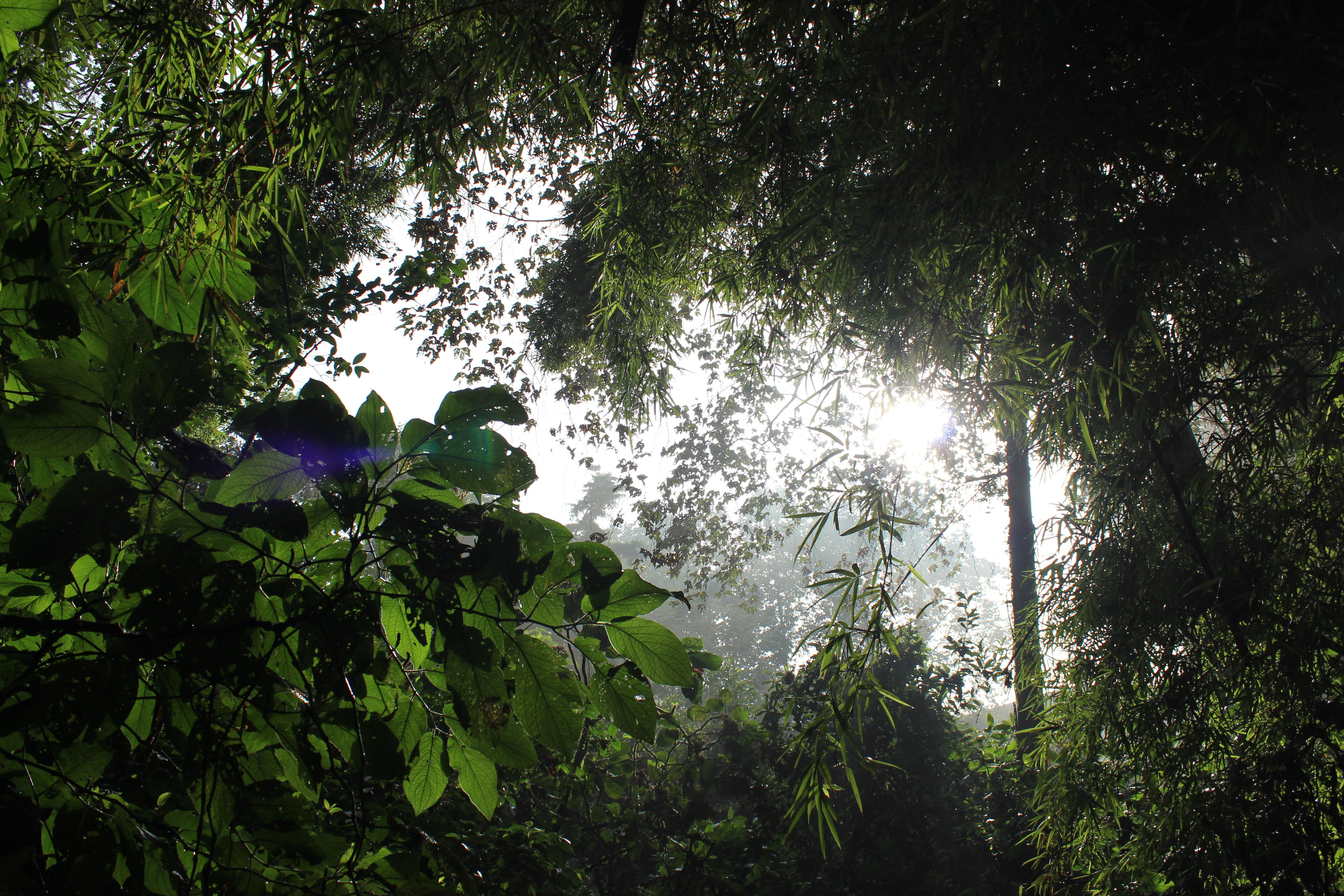 pr_tropical_forests_1