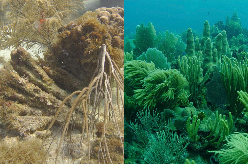 Corals Before and After