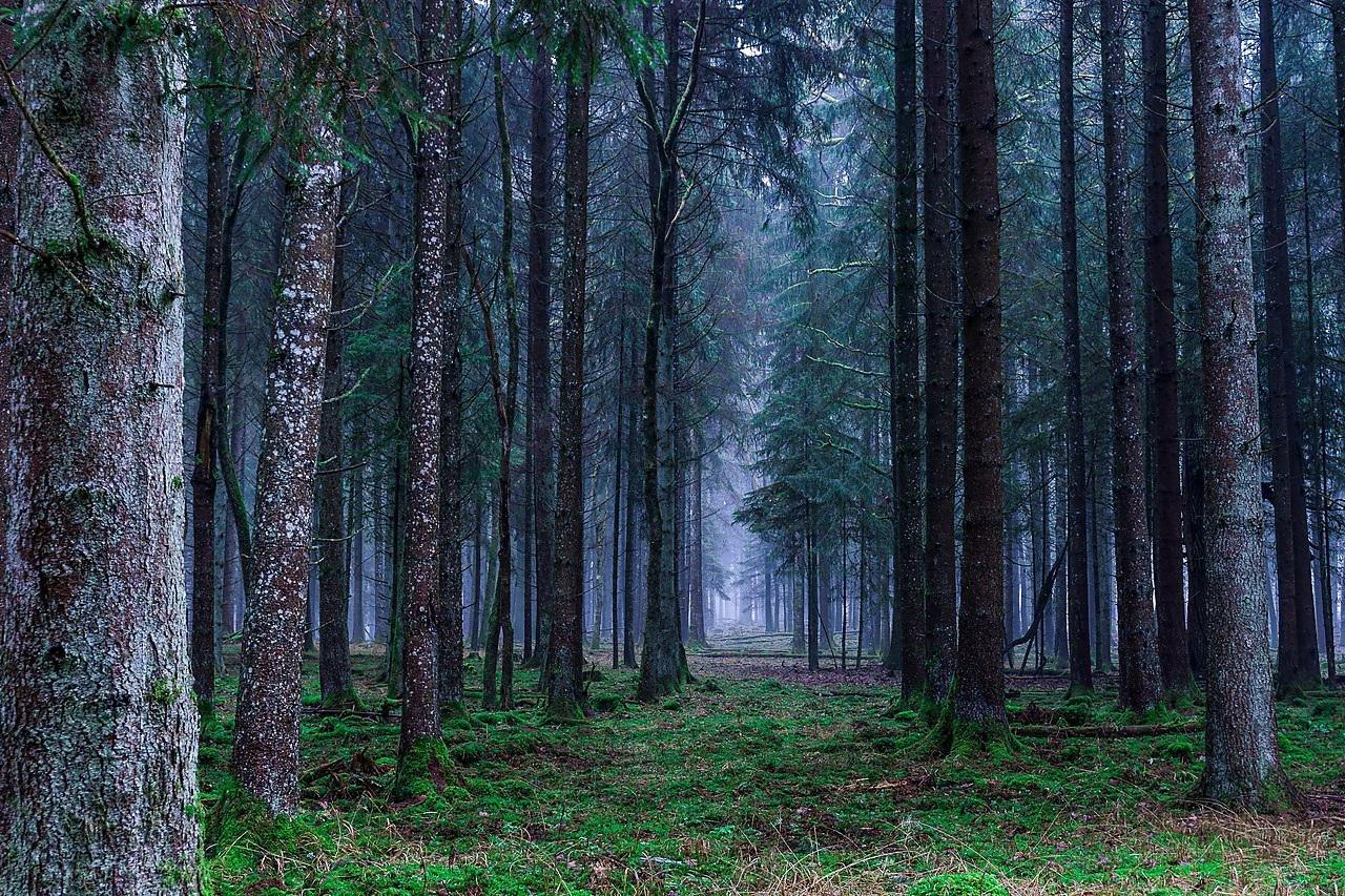 forest-europe