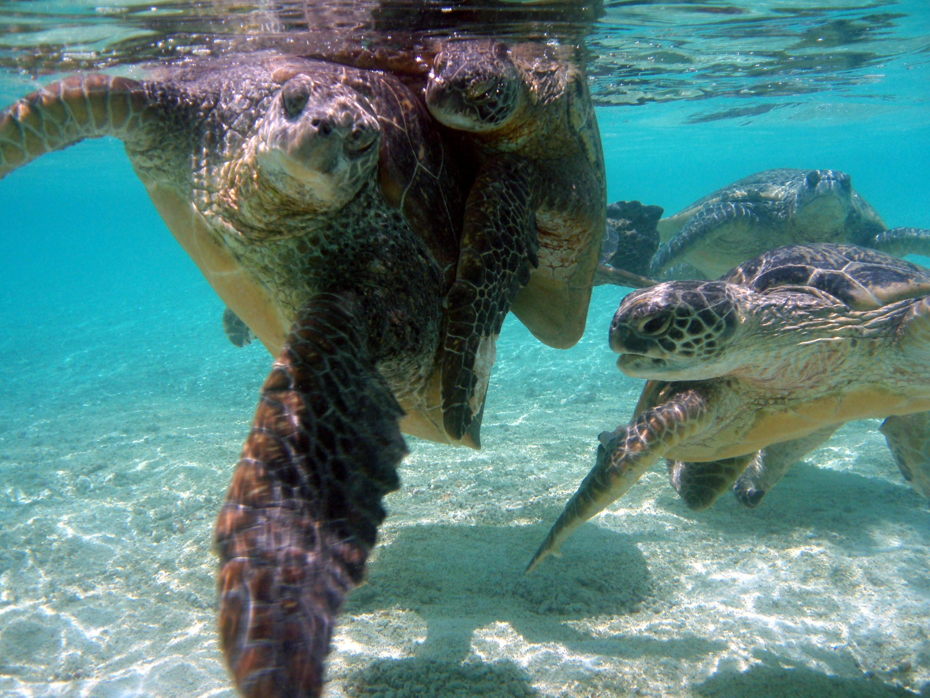 more efforts should be made to protect the endangered sea turtles More changes needed to protect enacted strong laws and regulations to protect sea turtles about loggerhead turtles and efforts to protect.