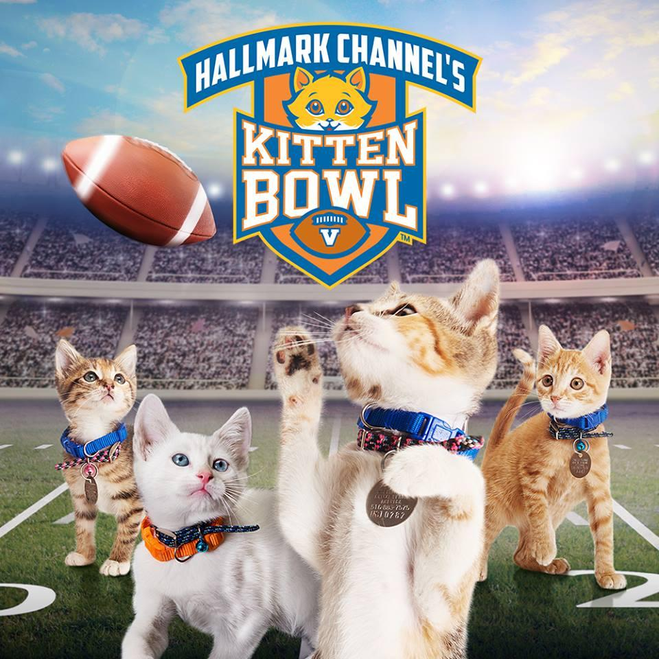 When are Puppy Bowl and Kitten Bowl 2018? Date, time, TV channels