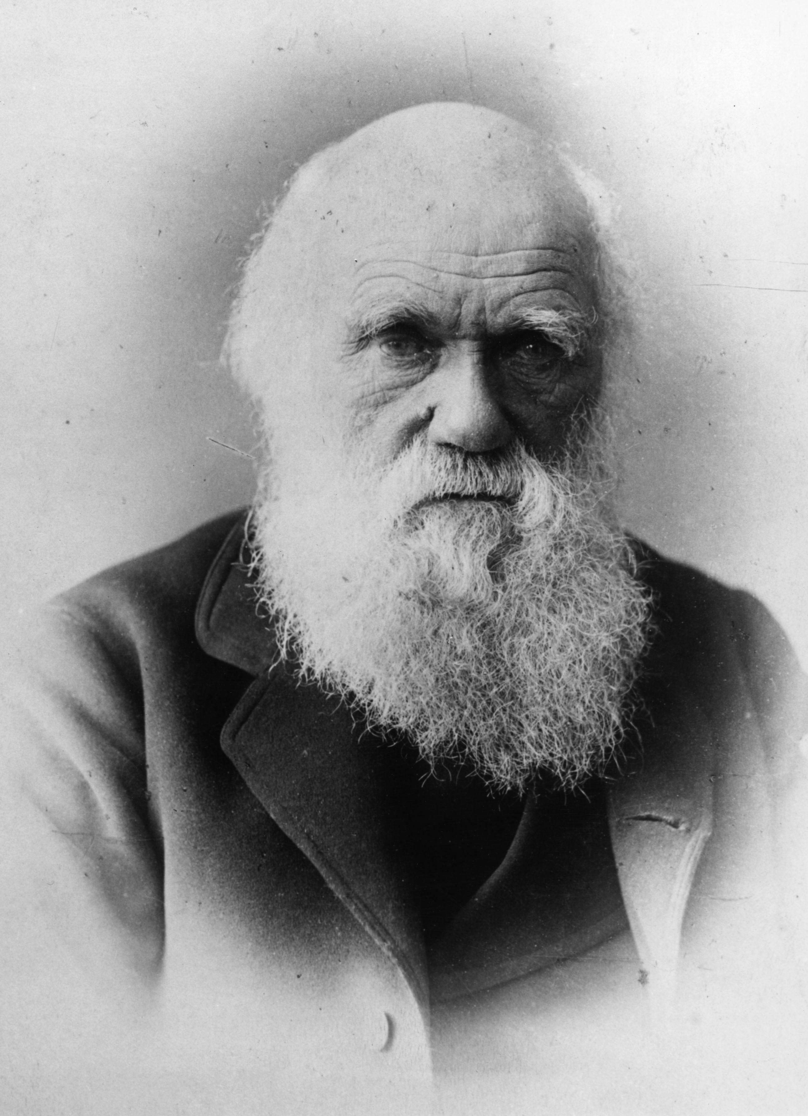 a study of the theory of evolution by charles darwin Darwin's theory of natural selection speciation study questions population and evolutiionary genetics overheads  darwin's theory of evolution by natural selection.