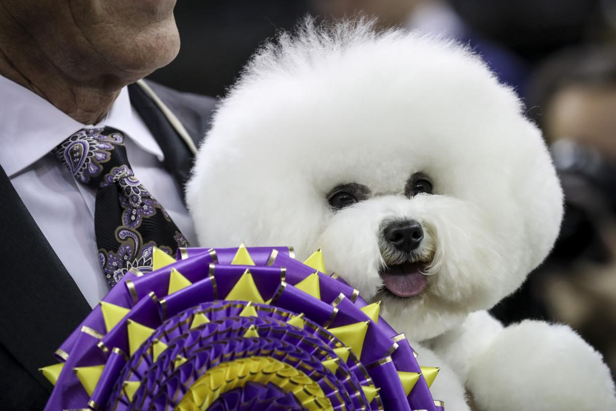 Watch Westminister Dog Show Online