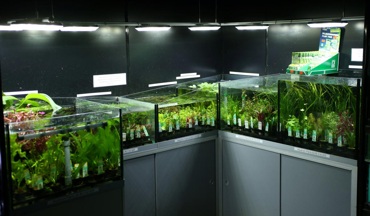 What is palytoxin fish tank cleaning releases deadly for How to clean an old fish tank