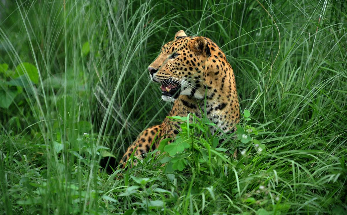 Leopard Attack Leaves Tourist With Torn Scalp Other