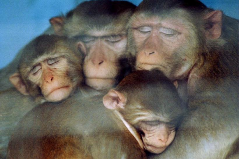 An experimental vaccine appears to give monkeys some protection against a version of HIV, the virus that leads to AIDS