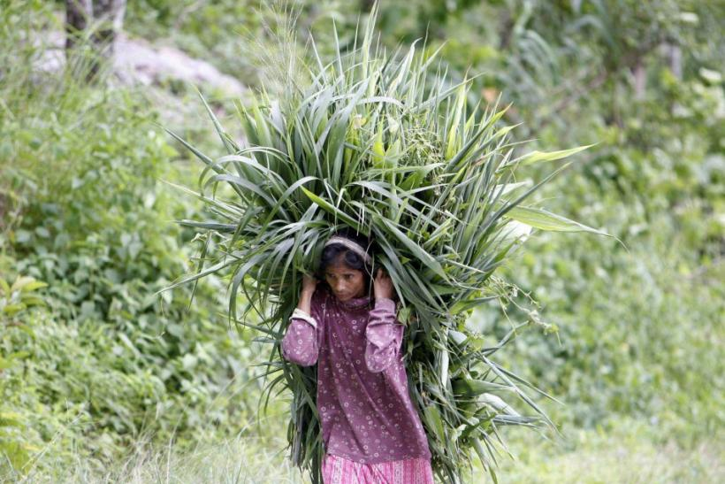 A woman carries grass to feed cattle at Rong Tong village near the eastern Indian hill town of Darjeeling J