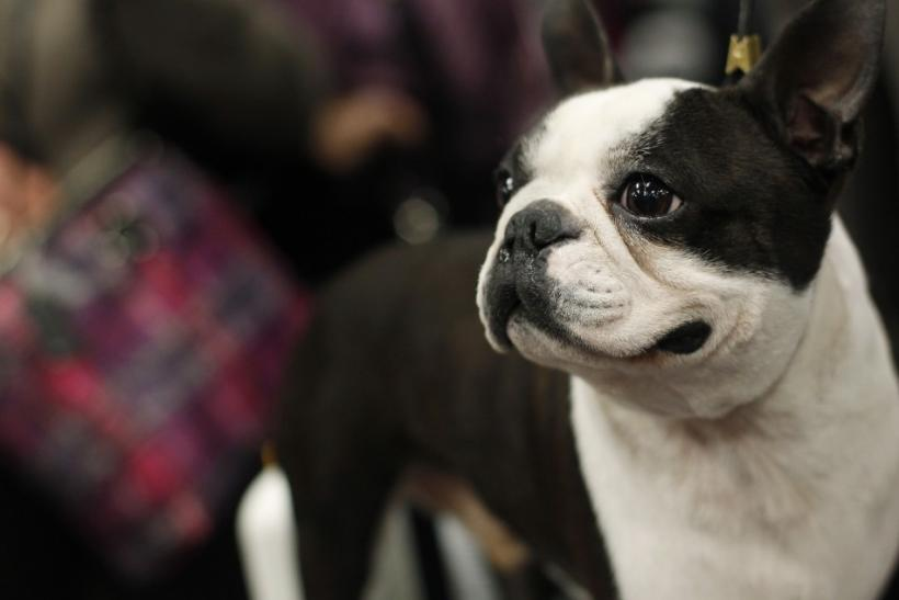 135th Westminster Kennel Club Dog Show