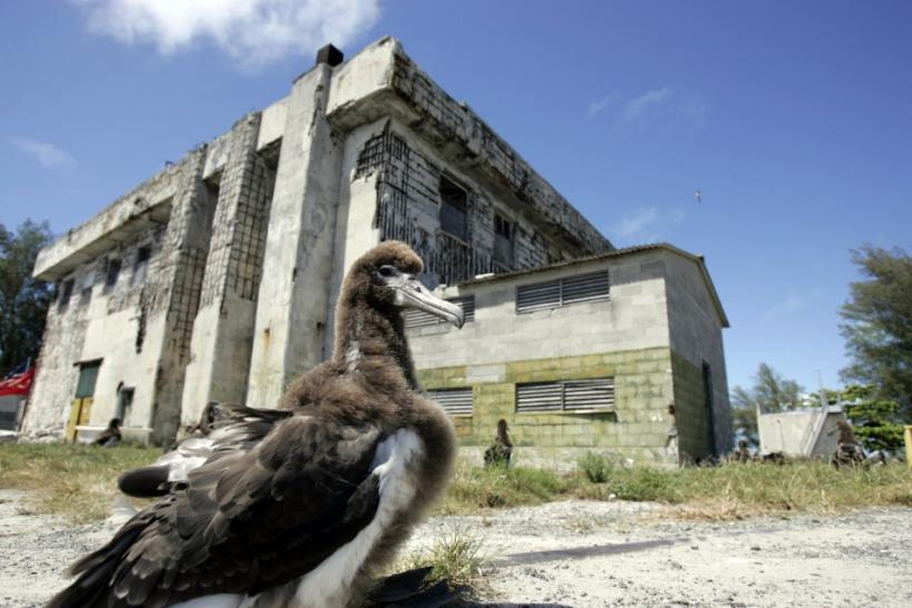 "A baby Albatross sits in front of a power plant that survived the ""Battle of Midway"" on Midway Island"