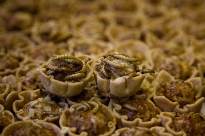 Mealworm Quiches