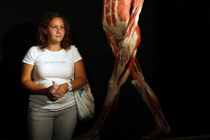 "A visitor (L) looks at a plastinated human body during the exhibition ""Body Worlds"" by Gunther von Hagen in Rome"