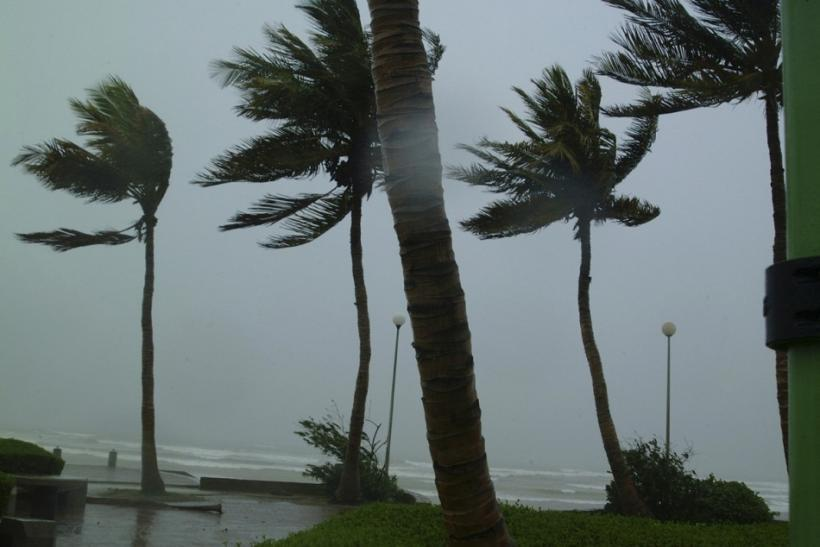 Winds bend palm trees during Cyclone Gonu in Muscat June 6, 2006.