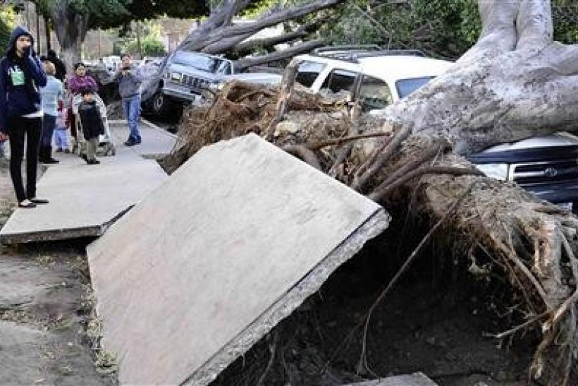Residents look at slabs of the broken concrete pavement and uprooted eucalyptus trees after a heavy wind storm in the morning at Highland Park in Los Angeles, California