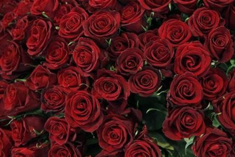 Red roses are pictured in a flower shop the day before Valentine's day in Vienna February 13, 2012.