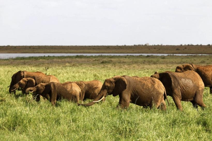 A herd of elephants is seen near Aruba dam at the Tsavo East National Park
