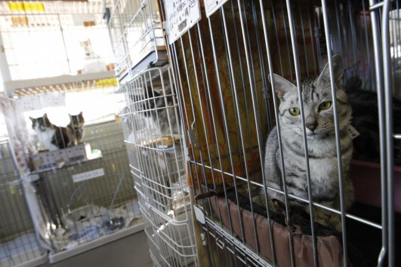 Fukushima Disaster Anniversary: Pets Revisited 1 Year Later