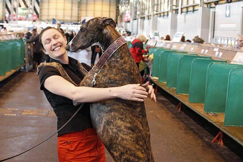 "Alexandra Malmgren is leapt upon by her Greyhound ""Radar"" on the final day of competition at the Crufts dog show in Birmingham"
