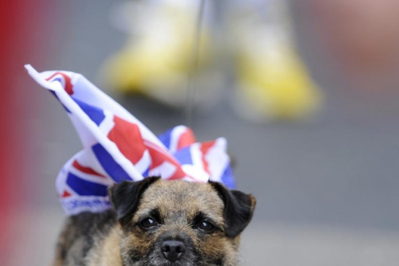 A dog walks with a flag attached to its back before the marriage between Britain's Zara Phillips and Mike Tindall in Edinburgh