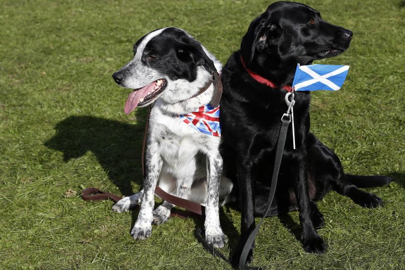 Dogs, Union Flag, Scottish Saltire, Aug. 30, 2014