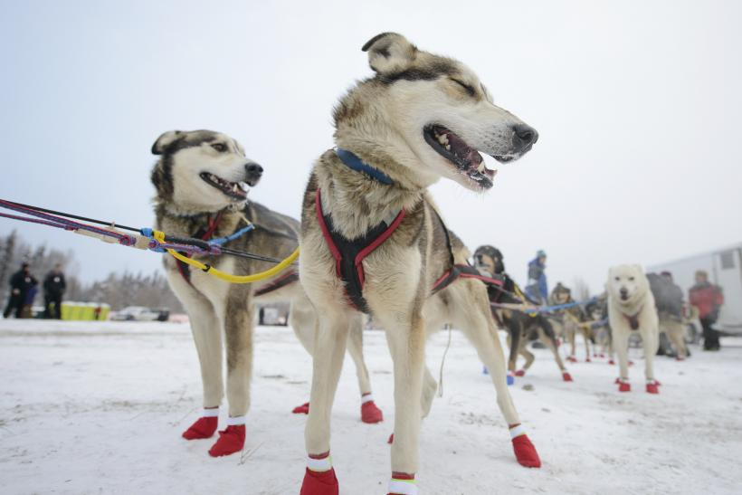 iditarod debate • the iditarod: story of the last great race by ian young • students will be divided into two groups and have a debate regarding the treatment of the animals in the iditarod including both training and the race itself.