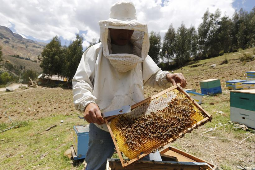Bee Colony Collapse Report