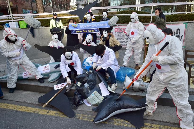 Anti whaling protests