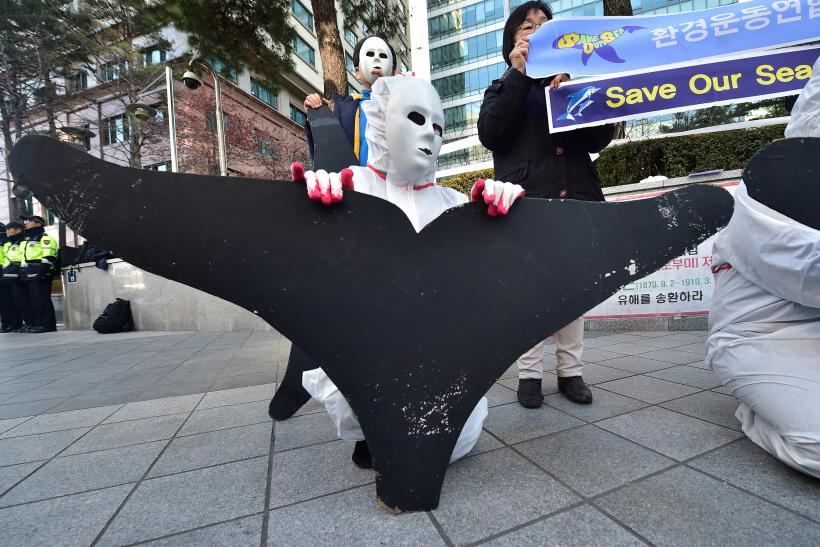 SouthKoreaWhaleProtest_Dec2015
