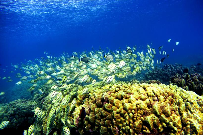 Hawaii coral reef